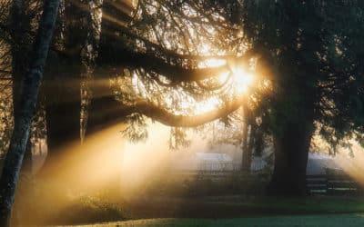Conférence résurrection et reincarnation
